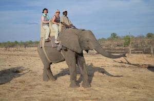 Merrily is riding an elephant in Victoria Falls, Zimbabwe
